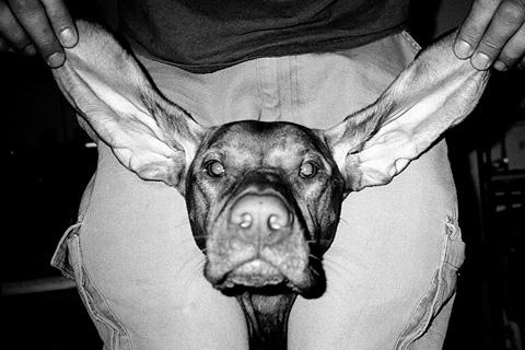 Hund 001